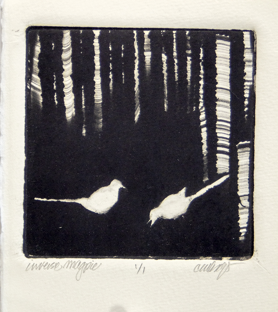 Magpies, aspen trees