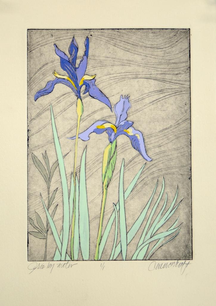 Wild Iris, mountain wildflowers